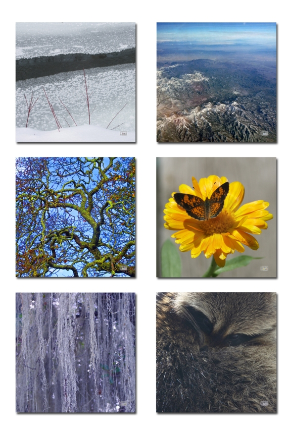 "Top to Bottom, Left to Right: Freezing; Mountains & Vapour; Mossy Branches; Reiterated Beauty; Nature's Drapery; All the Markings of a Bandit. Digital Photography. 10x10"" Prints, framed $125.00"